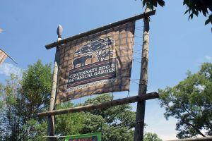 GorillaCincinnati_Zoo